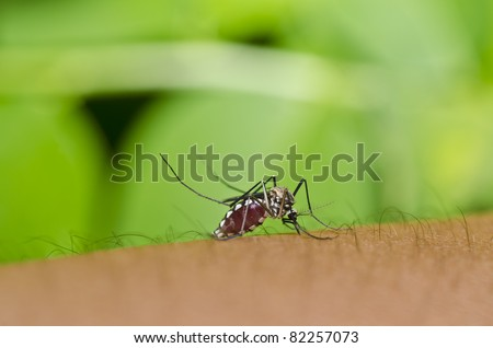 mosquito have full blood in green nature