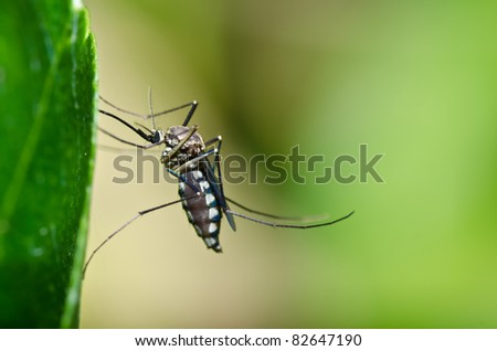 mosquito in forest or in the garden. It is danger - stock photo