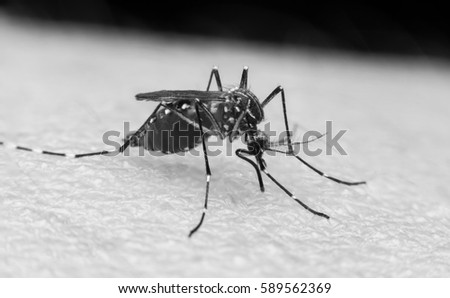 Dengue Stock Images, Royalty-Free Images & Vectors ...