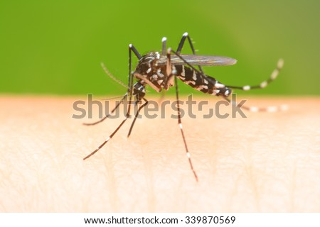 Mosquito on a human hand sucking blood - stock photo