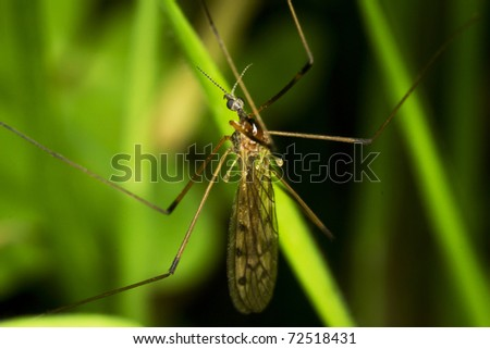 mosquito on a leaf - stock photo