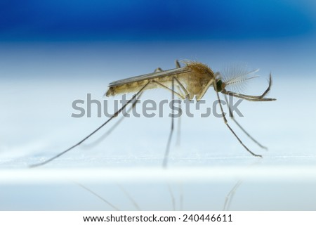 Mosquito on white and blue background - stock photo