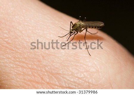 mosquito sucking blood from human hand - stock photo