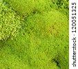 Moss - stock