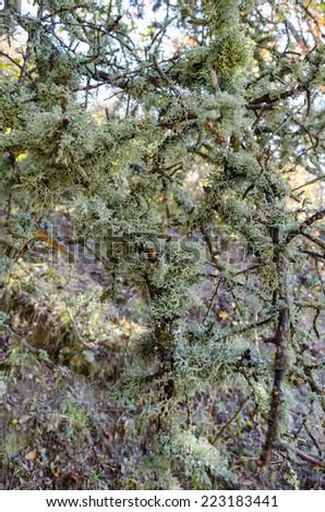 moss - stock photo