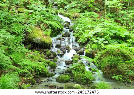 Moss and stream, Oirase stream, Aomori, Japan - stock photo