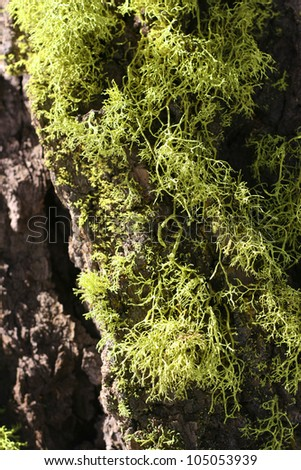 Moss and Tree Texture - stock photo