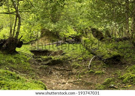 Moss covered ancient woodland in the New Forest National Park, Hampshire, England, UK - stock photo