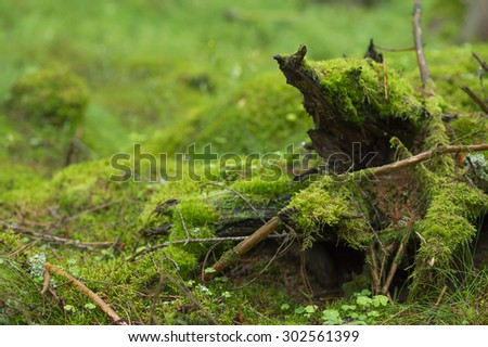 Moss covered branches in the forest. - stock photo