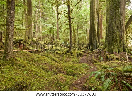 Moss covered Forest - stock photo