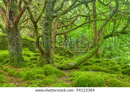 Moss Covered Forest in Killarney Park, Ireland (HDR composite) - stock photo
