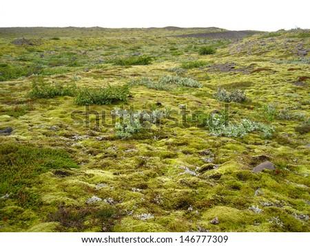 Moss covered lava plains, southern coast, Iceland - stock photo