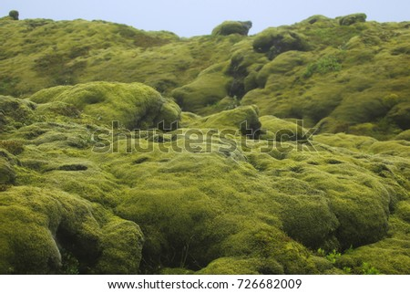 Moss covered lava stones in the south of Iceland