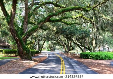 Moss covered oaks shade a street on Hilton Head Island - stock photo
