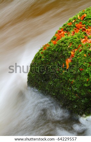 Moss covered rock in river with autumnal leaves
