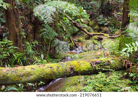 Moss covered roots in the dense rainforest of Lambir Hills National Park, Borneo, Malaysia. - stock photo