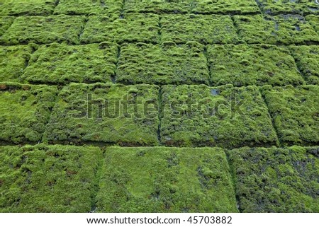 Moss covered stone surface