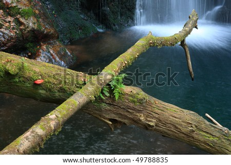 Moss covered tree trunks over a pond, waterfall on background - stock photo
