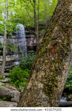 Moss Covered Tree with Rainbow Falls in Background on a hike near Gatinlinburg, Tennessee - stock photo