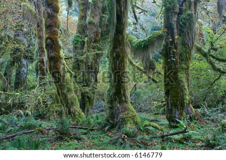 moss covered trees in hoh rainforest, olympic national park, pacific northwest