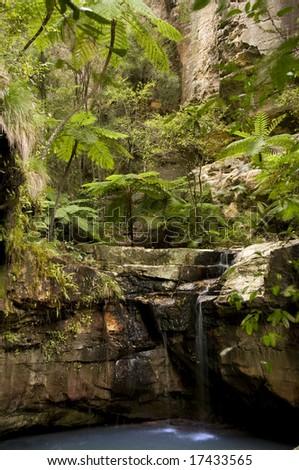 Moss garden carnarvon gorge national park queensland australia down