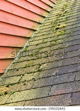 Moss Growing on Asphalt Shingle Roof - stock photo