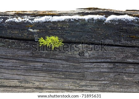 Moss grows from an old wooden fence post. - stock photo