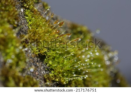 Moss in nature - stock photo