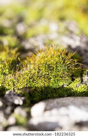 moss in nature. macro - stock photo