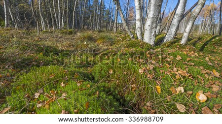 moss in peat bog wood - Sumava, Czech republic - stock photo