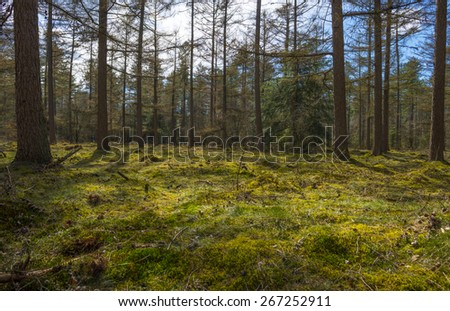 Moss in sunlight in a pine forest - stock photo