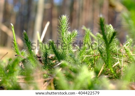 Moss in the forest green, rain, nature background closeup