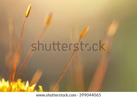 Moss macro ( selective focus ) - stock photo