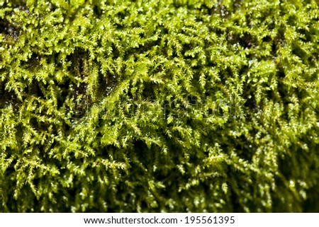 Moss of hand water bowl