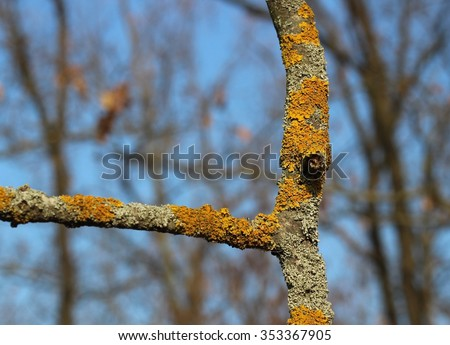 Moss on a bark of tree branch against blue sky