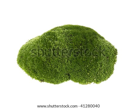 moss on a white background - stock photo