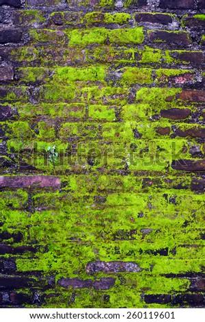 Moss on brick wall - stock photo