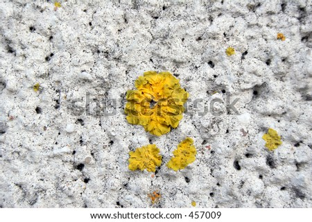 Moss on cement wall #2 - stock photo