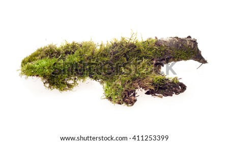 moss on driftwood on a white background - stock photo