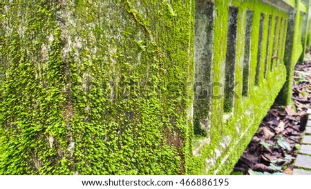 Moss on the cement rail