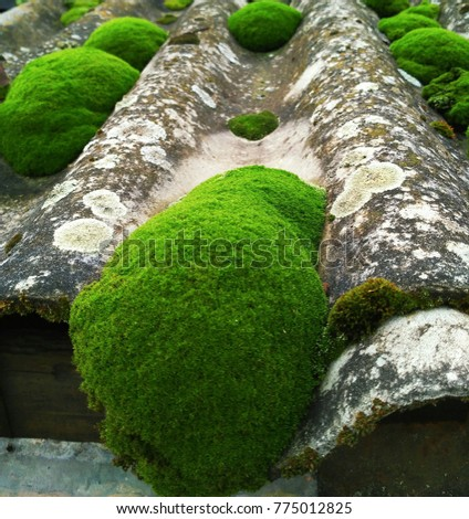 Moss on the old roof.