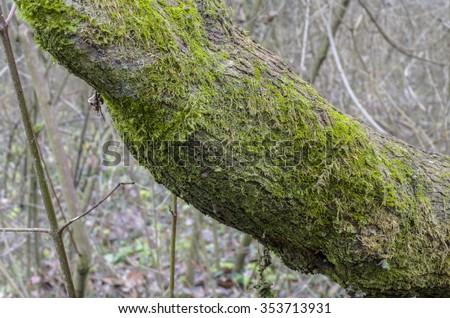 moss on the tree - stock photo