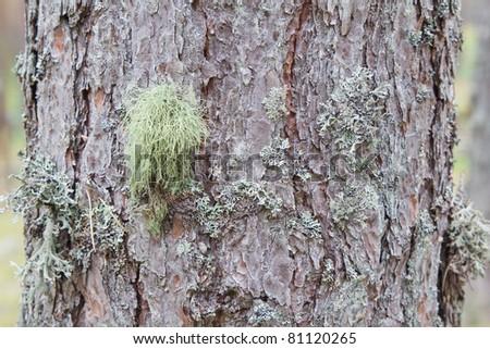 moss on the tree bark - stock photo