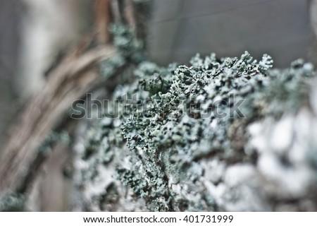 Moss on the tree. Shallow depth of field. Bokeh - stock photo