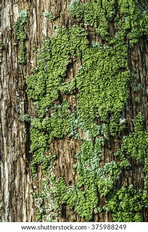 Moss on the trunk of a cypress