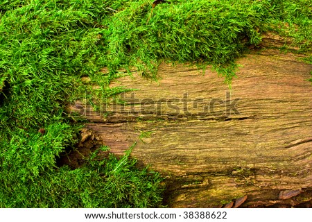 moss on tree, background - stock photo