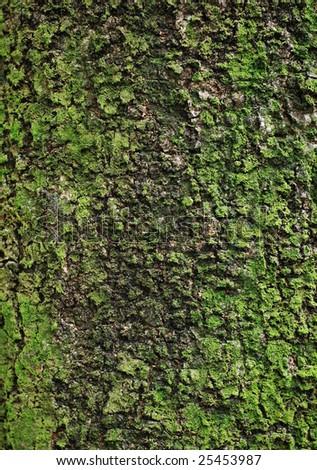 moss on tree close-up - stock photo