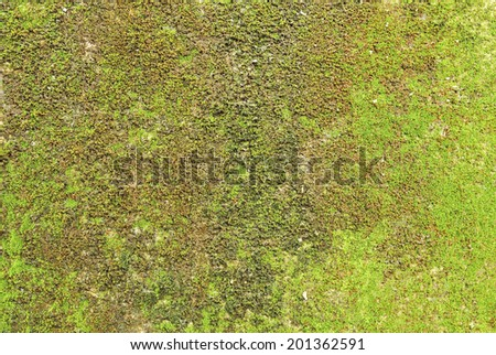 Moss on wall texture background. - stock photo