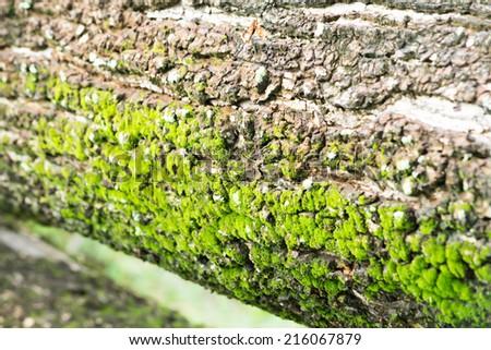 Moss or lichen  - stock photo