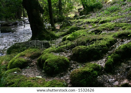Moss stones near the river